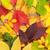 citromsárga · őszi · levelek · régi · fa · nedves · sötét · fa - stock fotó © karandaev