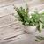 新鮮な · 庭園 · ハーブ · オリーブオイル · バジル · ローズマリー - ストックフォト © karandaev