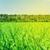 green grass field blue sky and forest stock photo © karandaev