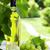 garrafa · de · vinho · branco · videira · vidro · monte · uvas · jovem - foto stock © karandaev