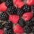 blackberries and raspberries stock photo © karandaev