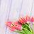 red tulips over purple wooden table stock photo © karandaev