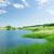 春 · 池 · 公園 · 新鮮な · 緑 · 木 - ストックフォト © karandaev