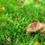 outono · cogumelos · grama · prado · ver · cópia · espaço - foto stock © karandaev