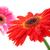 witte · kleur · dahlia · bloem · daisy · plant - stockfoto © karandaev