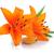 arancione · fiore · isolato · bianco · primo · piano · studio - foto d'archivio © karandaev