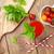 gyümölcs · dzsúz · por · fából · készült · egészség · gyógynövény - stock fotó © karandaev