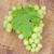 виноград · деревянный · стол · продовольствие · вино · фон - Сток-фото © karandaev