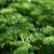 eszik · zöld · levelek · közelkép · lövés · növény - stock fotó © karandaev