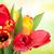 primavera · beleza · vermelho · tulipas · naturalismo · borrão - foto stock © karandaev