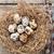 tojások · fészek · rusztikus · fából · készült · copy · space · természet - stock fotó © karandaev