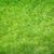 green grass stock photo © karandaev