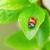 joaninha · grama · corrida · lâmina · grama · verde · belo - foto stock © karandaev