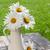 fresh garden chamomile bouquet stock photo © karandaev