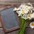 blackboard for your text and chamomile stock photo © karandaev