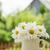 雛菊 · 甘菊 · 花卉 · 木桌 · 複製空間 · 葉 - 商業照片 © karandaev