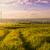 エンドレス · 緑の草 · フィールド · 青空 · 雲 · ツリー - ストックフォト © karpenkovdenis