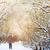 woman walking in the snowy forest stock photo © karpenkovdenis