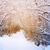 path in the snowy winter forest stock photo © karpenkovdenis