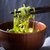 サラダボウル · 木製のテーブル · 背景 · 緑 · 青 · サラダ - ストックフォト © karpenkovdenis