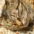 sleeping cat stock photo © kawing921