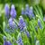 hyacint · narcissen · bloemen · Blauw · exemplaar · ruimte · witte - stockfoto © kawing921
