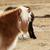 nyáj · lovak · tél · tájkép · hegy · tavasz - stock fotó © kb-photodesign