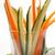 свежие · закуска · сырой · морковь · огурца - Сток-фото © keko64