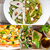 sopa · de · legumes · colagem · vegetal · rústico · sopa · coleção - foto stock © keko64