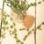 fresh thyme on a glass jar stock photo © keko64