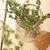 hojas · primer · plano · rústico · mesa · de · madera · casa - foto stock © keko64