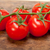 fresh cherry tomatoes on a cluster stock photo © keko64