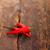 renkli · Meksika · ahşap · masa · kırmızı · gıda - stok fotoğraf © keko64