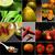 restaurant · eten · collage · verschillend · restaurant · gerechten · witte - stockfoto © keko64