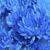 kék · krizantém · virág · kert · háttér · gyönyörű - stock fotó © Kidza