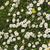 domaine · belle · herbe · soleil - photo stock © kidza