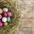 ovos · de · páscoa · ninho · rústico · colorido · pintado - foto stock © Kidza