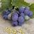 uvas · de · uva · semillas · vino · naturaleza - foto stock © Kidza