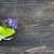 mező · virág · levél · kert · nyár · kék - stock fotó © kidza