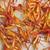 açafrão · textura · grama · laranja · restaurante · cor - foto stock © kidza