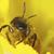 çalışma · arı · görüntü · makro · yeşil · hayvan - stok fotoğraf © kidza