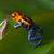 red striped poison dart frog blue legs stock photo © kikkerdirk