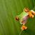 kırmızı · yeşil · Rainforest · Kostarika · meraklı - stok fotoğraf © kikkerdirk