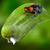 poison dart frog peru stock photo © kikkerdirk
