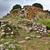 ruins of ancient culture sardinia nuraghe tower stock photo © kikkerdirk