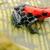 red poison arrow frog stock photo © kikkerdirk
