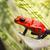 синий · яд · дартс · лягушка · макроса · выстрел - Сток-фото © kikkerdirk