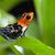 fantastic poison dart frog stock photo © kikkerdirk