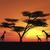 nagy · afrikai · fa · sziluett · naplemente · mező - stock fotó © kirschner