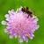 bee · afbeelding · bloesem · bloem · zwarte - stockfoto © Kirschner